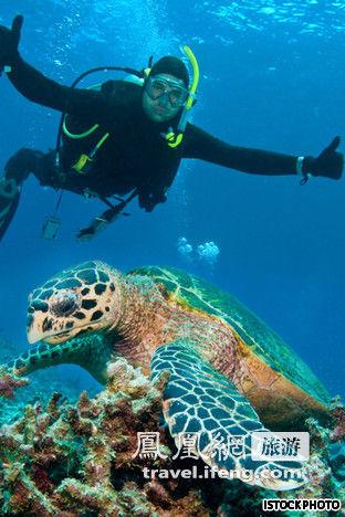 壁纸 海底 海底世界 海洋馆 水族馆 桌面 312_468 竖版 竖屏 手机