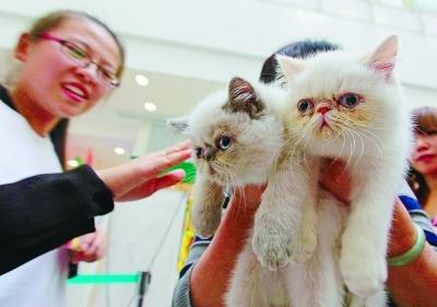 近100只可爱的宠物猫