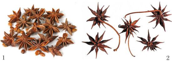 八角和茴香的区别