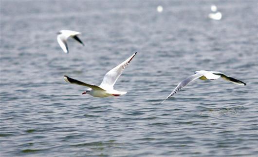 东湖水鸟美