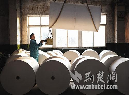 图为:每年收割的芦苇,被运到工厂制造成纸张