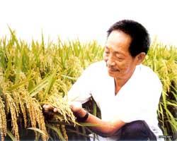 袁隆平培育超级稻