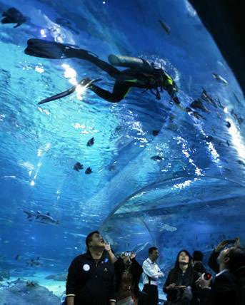 据了解,海昌武汉极地海洋世界拥有亚洲最大体量的海底隧道,全长100米