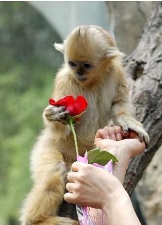可爱小猴子手机壁纸