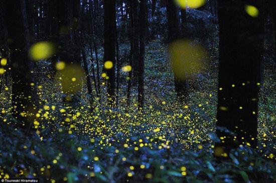 萤火虫森林