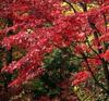 仙林之旅栖霞红叶