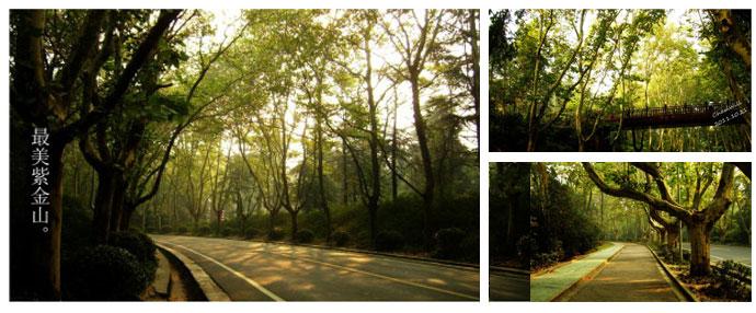 紫金山陵园路