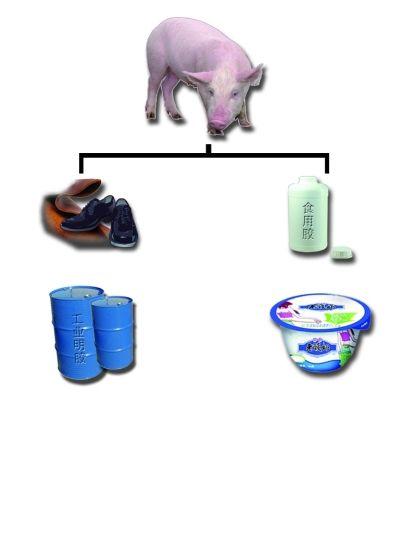 食用明胶从动物身上萃取