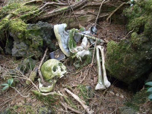 腐烂的骷髅