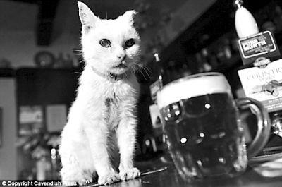 酒吧的长寿猫