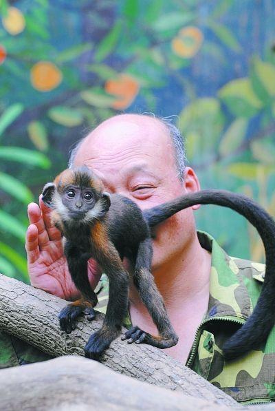 图为张帮胜在舔小猴子的屁股