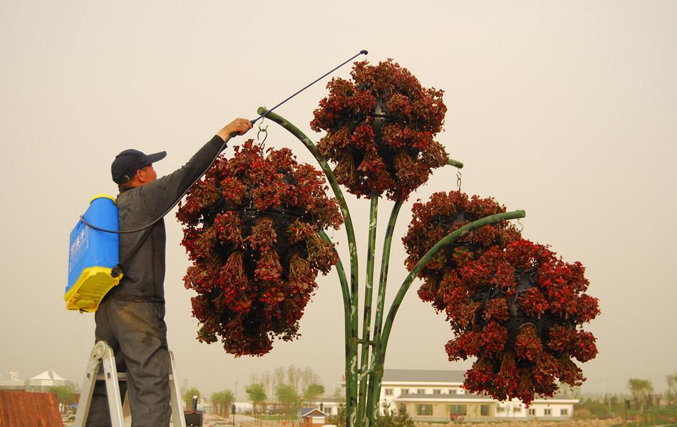 工作人员在为园内植物做护理