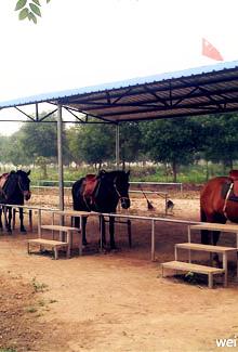 #新鲜旅镇江#骑马场骑马