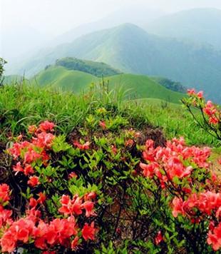 路边漂亮的花朵