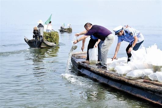 图为:投放鱼苗、种植水草