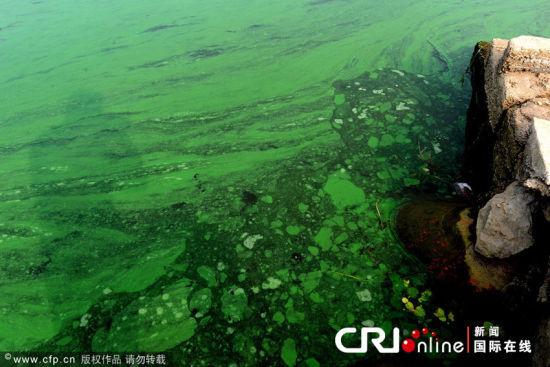 绿色漂浮物布满沿岸。