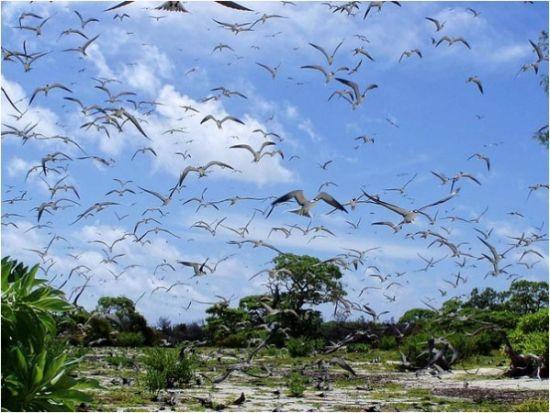 鸟岛上铺天盖地的鸟