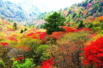 神农架的绚丽秋色。