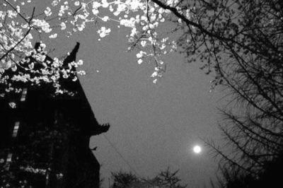 古风背景月亮淡雅