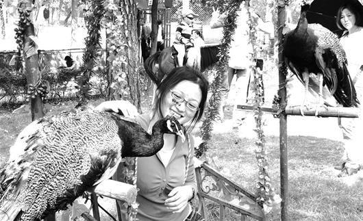 图为:九峰野生动物园内,游客与动物亲密接触 (记者万多摄)