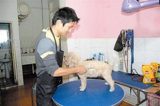宠物店寄养生意火爆 寄养收费水涨船高(图)