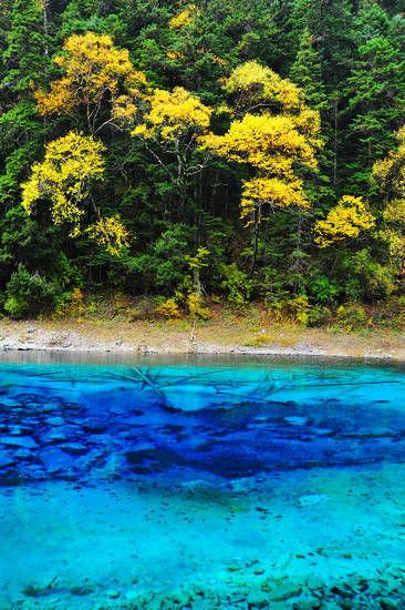 新浪旅游配图:九寨沟的蓝宝石--五彩池 摄影:谢超(九寨沟管理局 )