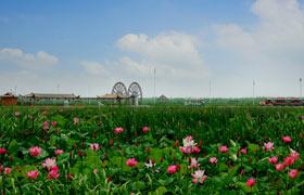 洪泽湖湿地美景