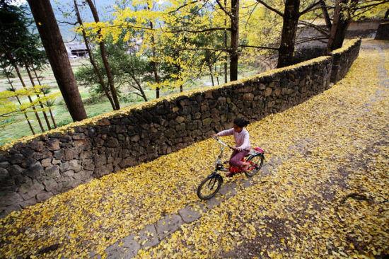 新浪旅游配图:骑自行车的小女孩 摄影:肖育文
