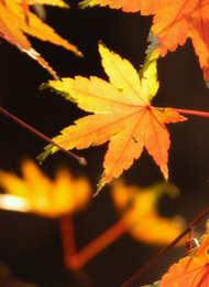 最美的红叶 枫叶摄影指南