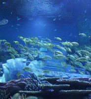 武汉极地海洋世界