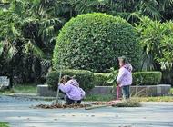 南京3岁双胞胎姐妹帮奶奶扫落叶萌翻网友