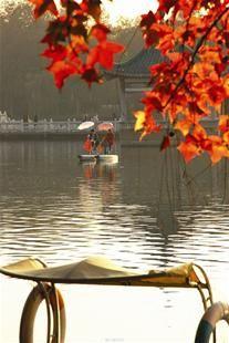 图为:江城如画里秋风吹不尽 乐乐呵呵摄于武昌东湖