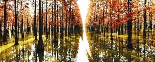 图为:悠悠一泓水 滟滟映秋光 武昌老帆摄于涨渡湖农场
