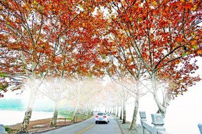 秋天的银杏树简谱