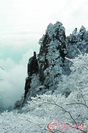 冬天的黄山也有雾凇。