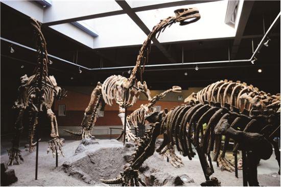 恐龙化石装饰背景墙   进入武汉中华奇石馆大门,很奇怪看不到馆内的安保人员。对此,王祥波笑说,我刚忘记跟你们讲,这里从大门开始就有摄像头监控,所以,千万不要想耍什么小动作。   古生物化石馆,自2009年5月开馆一来,一直都特别受欢迎。一楼的综合化石馆,大厅中央里是巨大的猛犸象化石。据王祥波说,一个象头就有一吨多重,上次去广州展览时,光找叉车运象头就花了4000元。   在这一楼,你不难发现有很多新奇的小化石。除了类似湖北龙虾的奇异环足虾,长得像莲藕却实际是动物的海百合等动物化石。其中,有两个特别值得