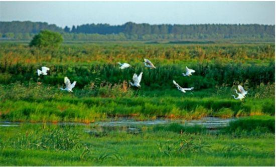千岛湖湿地