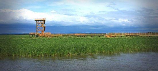 燕窝岛湿地