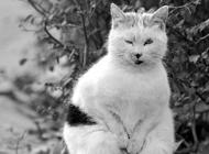 """南京""""搓手猫""""成网上最红猫咪 众人欲收养"""