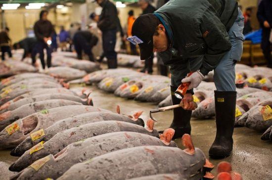 趁东京筑地鱼市场还未消失,赶紧去看看吧。