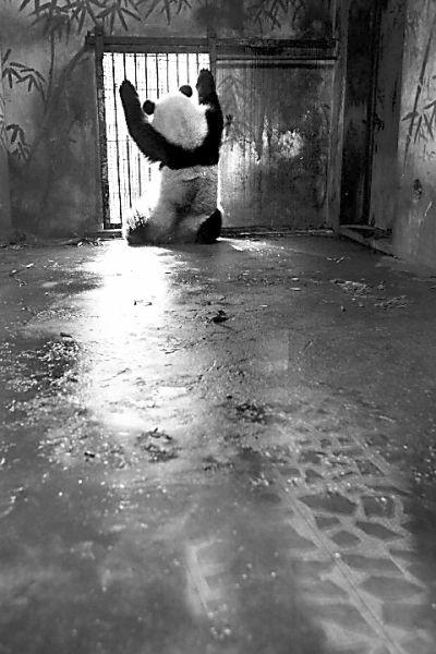 温州摄影师郑晓群拍摄的照片《牢笼》获得自然类组照二等奖