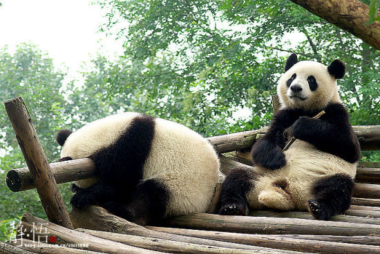 新浪旅游配图:熊猫 摄影:李双喜