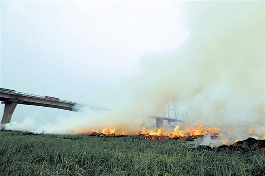 江滩芦苇再失火 疑似拍客点燃的