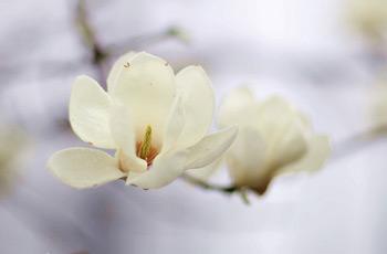 达人拍的美丽的花