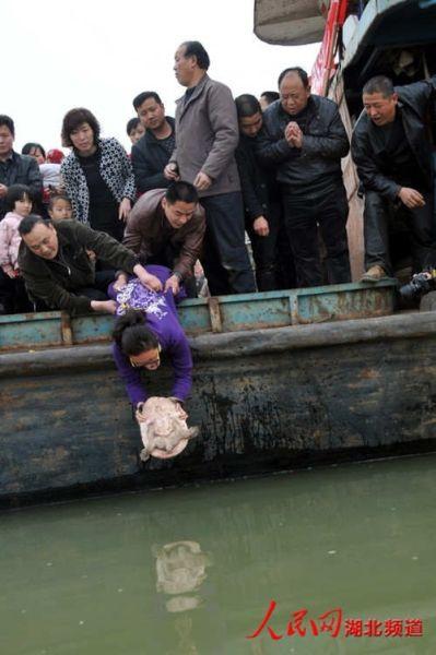湖北动物保护者花万元买14只巨鳖放归汉江