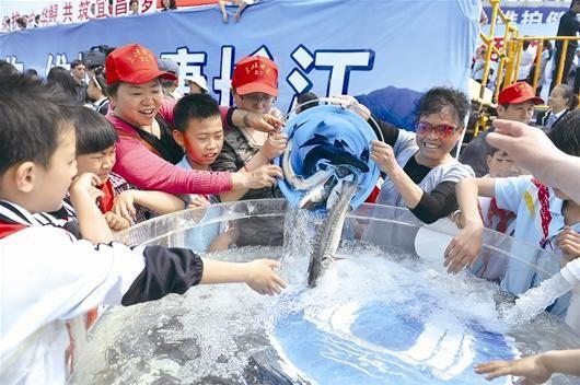 晚报义工参加中华鲟放流活动。本报记者刘康 摄