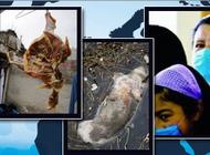 江苏18日新增1例禽流感确诊病例 苏州一患者死亡