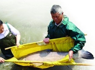 苏州出水祖母级特大青鱼 重达102斤身长1.59米