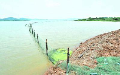 27日,东湖后湖九峰渔场隔绝精养鱼塘和散养鱼塘的围埂已全部挖除,围堰由渔网替代 记者李永刚 摄