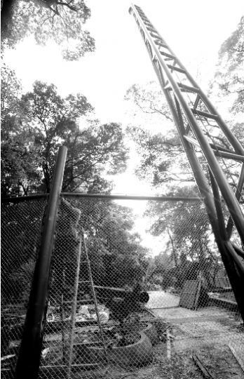 昨日,工人在彩鹦谷内搭建立柱和围网。本报记者 孙辰 摄
